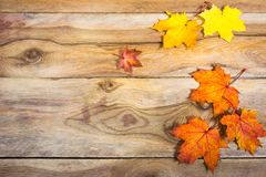 Thanksgiving background with vivid fall maple leaves, copy space. Happy Thanksgiving greeting background with vivid fall maple leaves, copy space royalty free stock image