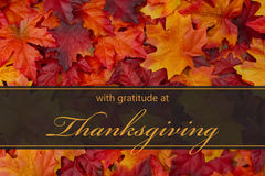 Happy Thanksgiving Greeting. Fall Leaves Background and text with gratitude at Thanksgiving royalty free stock image