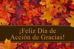 Happy Thanksgiving Greeting in Spanish. Some fall leaves with text Feliz Dia de Accion de Gracias Royalty Free Stock Image
