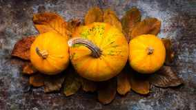 Happy Thanksgiving. Pumpkins and fallen leaves on dark retro background. Autumn and seasonal decorations. Thanksgiving Holiday still life royalty free stock photos