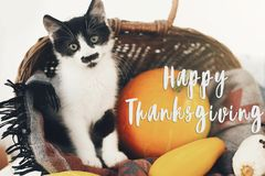 Happy Thanksgiving text, seasons greeting card. Thanksgiving sign. Cute kitty, pumpkin, wicker basket on wooden background. Cat. And autumn vegetables royalty free stock photos