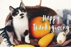 Happy Thanksgiving text, seasons greeting card. Thanksgiving sign. Cute kitty, pumpkin, wicker basket on wooden background. Cat. And autumn vegetables stock photos