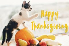 Happy Thanksgiving text, seasons greeting card. Thanksgiving sign. Cute kitty, pumpkin, wicker basket on wooden background. Cat royalty free stock photos