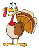 Happy thanksgiving turkey bird Royalty Free Stock Photos
