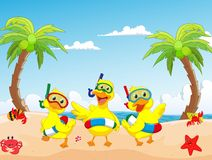 Happy three cartoon duck on the beach summer Stock Photos