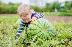 Happy toddler boy chooses a watermelon Stock Images