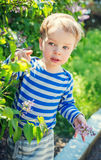 Happy Toddler boy plucks flowers Royalty Free Stock Images