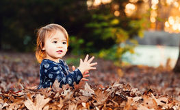 Happy toddler girl playing in a pile of fall leaves at sunset. Happy toddler girl playing outside in a pile of autumn leaves at sunset stock photography