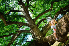 Happy toddler girl sitting on branch huge tree Royalty Free Stock Photos