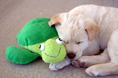 Happy Together. A puppy sleeping next to his best friend Stock Photography
