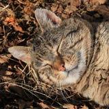 Happy tom cat sleeping in the sun Stock Photo