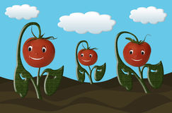 Happy Tomatoes Growing in a Garden Royalty Free Stock Photo