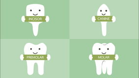 Happy tooth type with detail word - incisor, canine, premolar, molar, kind of teeth