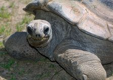 Happy Tortoise. In the Sun Stock Image