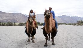 A happy tourist couple riding on double humped Bactrian camels. A happy tourist couple expressing their excitement while they ride on double humped Bactrian Royalty Free Stock Image