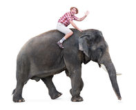 Happy tourist rides on an elephant Royalty Free Stock Image