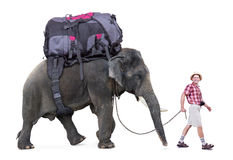 Happy tourist walking a elephant. Isolated on white background Royalty Free Stock Image