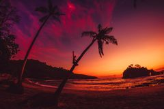 Happy traveler man on coconut palm and bright sunset or sunrise at tropical beach with ocean. Happy traveler man on coconut palm and bright sunset or sunrise at stock images