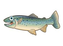 Happy Trout Cartoon Illustration Royalty Free Stock Photo