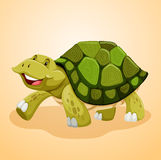 Happy turtle walking alone Royalty Free Stock Images