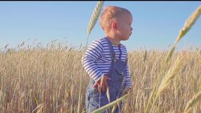 Small farmer. Happy two year old boy standing on field with ripe rye at sunny day. slow motion. concept. stock video footage