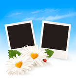 Happy Valentine's Day background. Two daisies and photos. Royalty Free Stock Photo