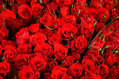 HAPPY VALENTINES DAY. Copenhagen / Denmark_  14 February 2017 - Red roses for valentines day celebration with love and romance.    Photo. Francis Joseph Dean/ Royalty Free Stock Image