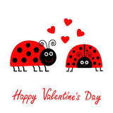 Happy Valentines Day. Love card. Two cartoon pink lady bug couple with hearts Flat design Stock Photography