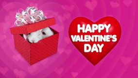 Happy Valentines Day messages on big red heart and couple of rabbits. Looking from the present box stock footage