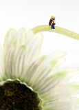Happy Valentines Day. Miniature couple sitting on a flower Royalty Free Stock Photography