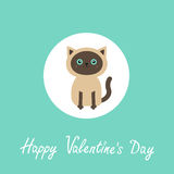 Happy Valentines day. Siamese cat round circle icon in flat design style. Cute cartoon character. Happy sitting kitten with blue e Stock Image