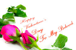 Happy Valentines Day. Two pink roses for my beloved Valentine Royalty Free Stock Photos