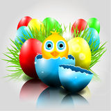 Happy Vector Easter  Background with chick in brok Stock Photography