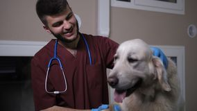 Happy vet communicating with dog at pet clinic stock video footage