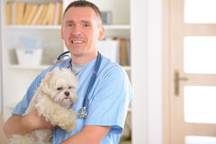 Happy vet with dog Stock Photos