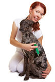 Happy vet giving dog an injection Royalty Free Stock Photo