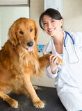 Vet holding a dog paw Stock Photography