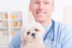 Happy vet holding a little dog Stock Image