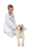 Happy vet petting yellow labrador dog Stock Photography