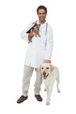 Happy vet smiling at camera with yorkshire terrier and yellow labrador Stock Photography