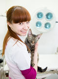 Happy veterinarian with devon rex cat in vet office.  royalty free stock photography