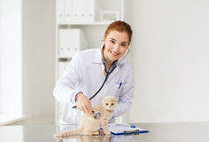 Happy veterinarian with kitten at vet clinic Stock Image