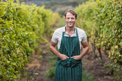 Happy vintner with hands in pockets Royalty Free Stock Images
