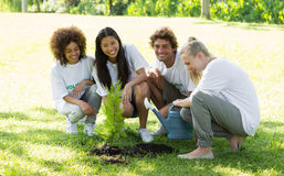 Happy volunteers planting in park Royalty Free Stock Photos