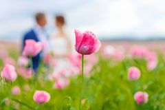 Happy wedding couple in pink poppy field stock images