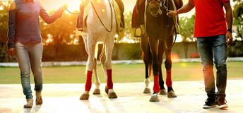 Couple standing with horses on a field royalty free stock image
