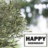Happy Wednesday Word. Word `happy wednesday` on blurred flower background Stock Images