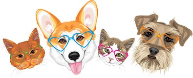 Happy Welsh Corgi, Schnauzer And Two Cute Cats In Glasses Heart Shaped Royalty Free Stock Images