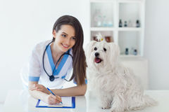 Happy white dog and beautiful veterinarian doctor in vet clinic. Happy cute white dog and beautiful veterinarian doctor in vet clinic Royalty Free Stock Photography