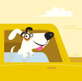 Happy white dog travelling in yellow car. A funny dog enjoys travel ride in the car. Vector Illustration Royalty Free Stock Images